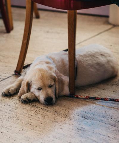 Hund willkommen im Apartment im Peaks Place Aparthotel in Laax